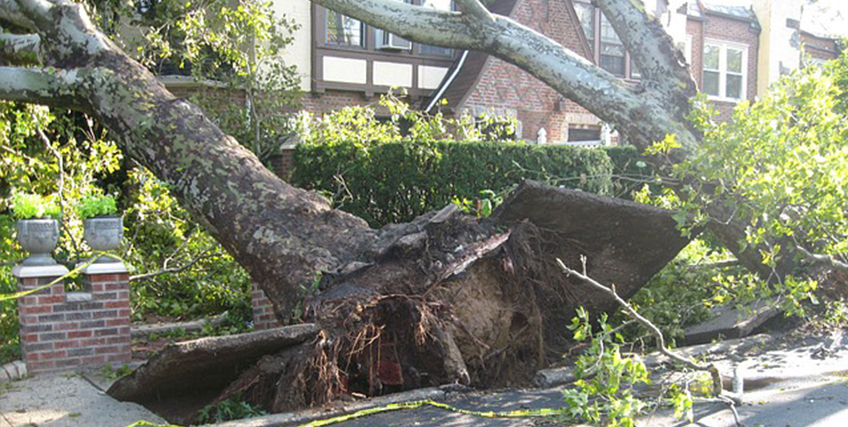 SBA Disaster Loan